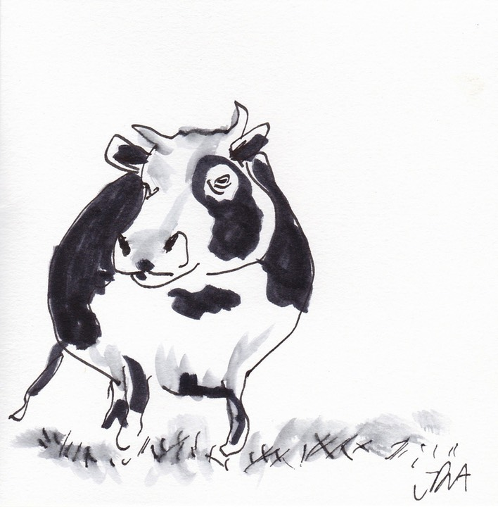 black and white cow 1